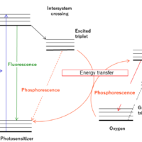 Detection of phosphorescence from singlet oxygen using NIR spectrofluorometer