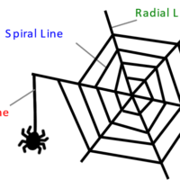 Analysis of the orientation and secondary structure of spider silk using polarized microscopic Raman spectroscopy